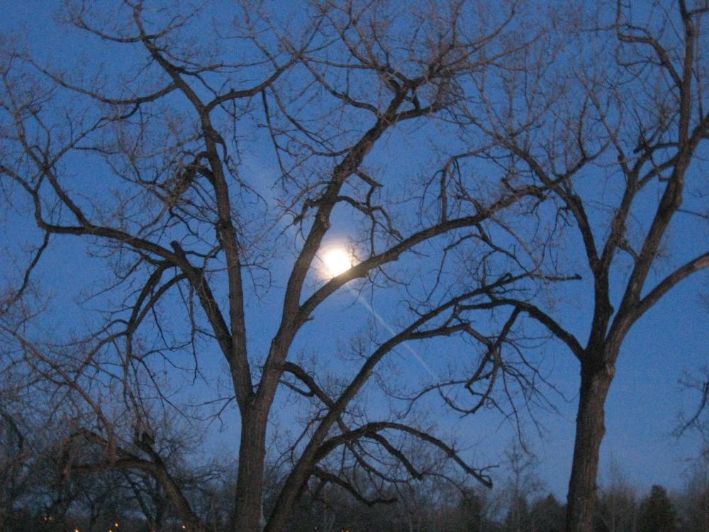 Trees under the Moon!